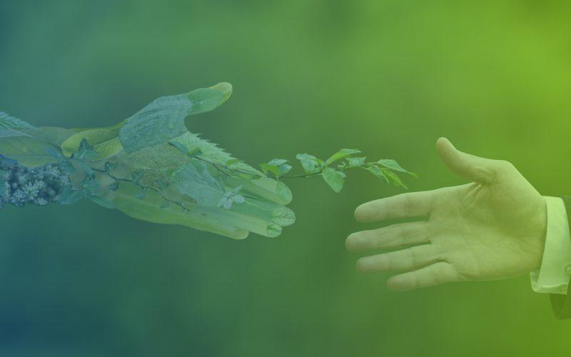 Ecology: i servizi per l'ambiente che stavi aspettando in Liguria